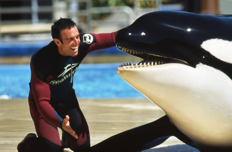 Read more about the article An Orca Q&A With Robin Riggs